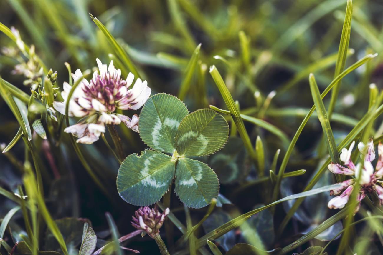 trebol-cuatro-hojas